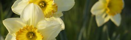 Livraisons de fleurs : mode d'emploi
