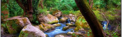 La forêt comme possibilité d'investissement