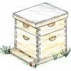 La visite de printemps en beekeeping