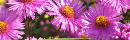 Des plantes vivaces pour les 4 saisons